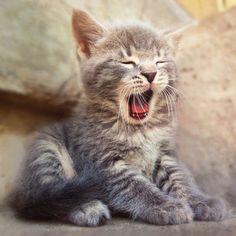 Sleepy Tiny Cat