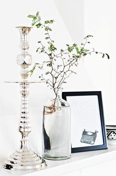 Sophora in a vase.