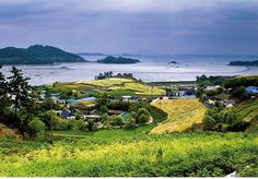 Dalcheon Village: The golden barley field of Dalcheon Village in Sora-myeon, Yeosu-si (City), Jeollanam-do (South Jeolla Province) looks even more beautiful with the sea in the background. | Korea