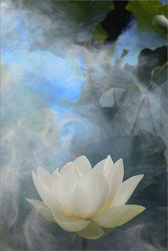 White Lotus Flower Surreal Series - Please view on black bg.... thx