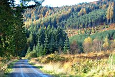 Galloway Forest Park, Dumfries and Galloway