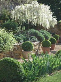 31 Awesome Mediterranean Garden Design Ideas For Your Backyard - Garden Garden Projects, Garden Design, Plants, Mediterranean Garden Design, Small Gardens, White Gardens, Outdoor Gardens, Garden Planning, Garden Landscaping