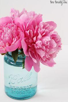 pink peonies in blue mason jar Big Flowers, Exotic Flowers, Purple Flowers, Paper Flowers, Beautiful Flowers, Flowers Garden, Hot Pink Roses, Pink Peonies, Yellow Roses