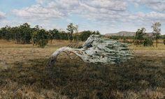 Cold Wind 2006 Winner: Tattersalls Landscape Painting Prize 2008 Lisa Adams