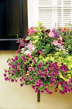 Container Gardens: Floral Window Box