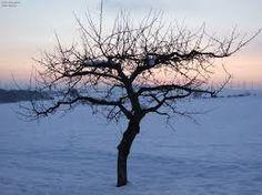 winter bäume - Google-Suche