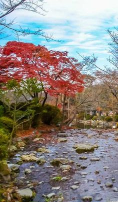 Outono no Japão, Kyoto Autumn in Japan, Kyoto