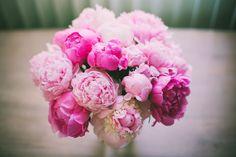 Pink Peonies!