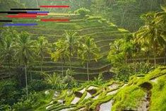 Insel Hopping durch Indonesien | Secret Escapes Mexican Food Buffet, Mexican Food Recipes, You Never Know, All You Can, Banaue Rice Terraces, Bali, Secret Escapes, Ubud, South Carolina
