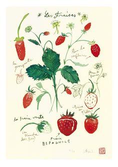 Art for kitchen Strawberries botanical plate Limited edition fruit print Food art Kitchen decor
