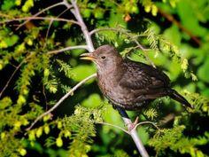 Landwirtschaft bringt Vögel um - Heimische-Wildpflanzen.de