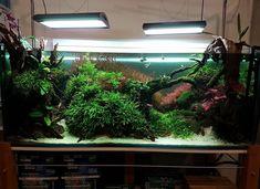 Discus Aquarium, Glass Aquarium, Nature Aquarium, Planted Aquarium, Aquatic Insects, Video Game Rooms, Aquascaping, Terrariums, Amphibians