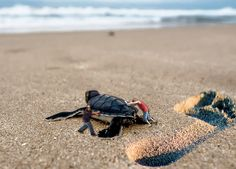 Save the turtle..