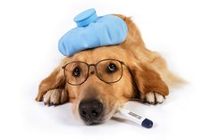 What To Do If Your Dog Has Kennel Cough - Three Million Dogs