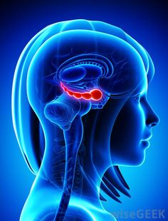 What is the Hippocampus?