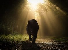 In mysterious light. Photo by Renate Werz -- National Geographic Your Shot Amazing Photography, Nature Photography, Hobby Farms, Ansel Adams, National Geographic Photos, Dog Pictures, Photo Editor, Pet Birds, Beautiful Pictures