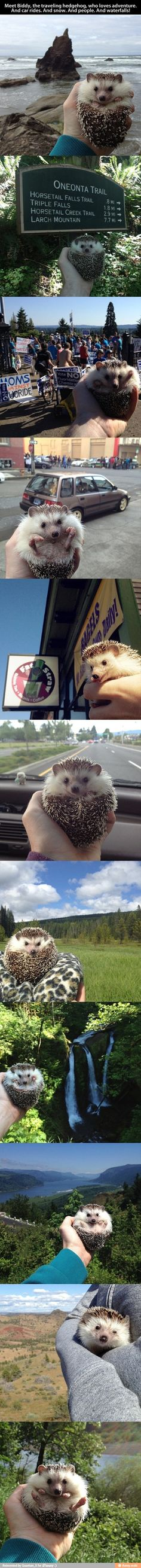 I want a hedgehog to take with me on my travels too!