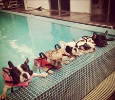 """""""We know we're here to learn how to swim but we don't approve of our extremely wet tummies. We will accept a refund in snacks."""""""