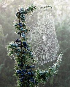 Miss Spider's bobbin lace handiwork.