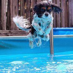 Tri Colour swimming fun.