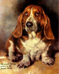 """""""This worried-looking creature is the Basset Hound."""""""