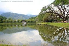 Lake Garden - Taiping Perak Malaysia - Creative Art in Photography by TyaGem Creations in Portfolio Nature / Reflection Photography at Touchtalent Reflection Photography, Nature Photography, Lake Garden, Taiping, World Best Photos, Photo Contest, Creative Art, Mystic, Community