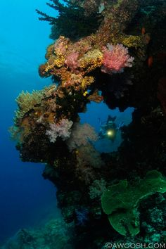 A hole in the wall at E6. The huge pinnacle is one of Fiji's best-known dive sites.