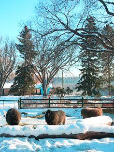 Explore Edmonton / Visit To The Zoo
