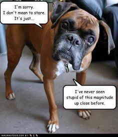 Dogs always tell the truth.