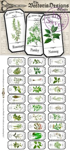 Herbal Apothecary Labels - Save Ink - Mini Herbal Apothecary Labels Save Ink von VectoriaDesignsSAVE SAVE may refer to: Apothecary Bottles, Bottles And Jars, Printable Labels, Printables, Herb Labels, Spice Labels, Herbs List, Vintage Labels, Test Tubes