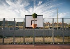 Potted Plant Basketball Hoop