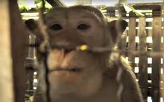 If you're in search of inspiration, a little spark of hope or just a reason to smile today, then check out this rescue of a handsome macaque named George.