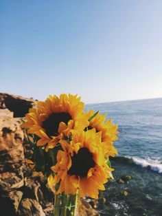 Sunflowers are the perfect flowers