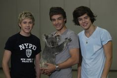 Oh my gosh one direction with a koala bear hugging Liam! Could this get any cuter??