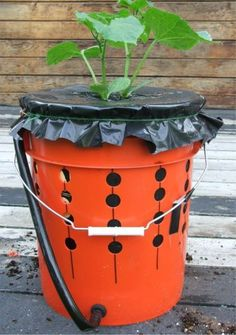 Container Gardening 101 HOMEGROWN.ORG- How to make self-watering recycled bucket containers.