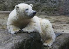 Superb Best photos of animals from around the world this week