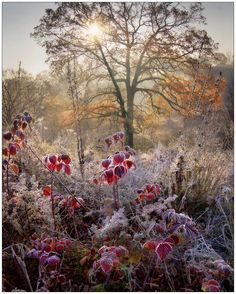 Garden Design Cheap Autumn Tales by Alexander Kitsenko The awesome thing about this picture is that any other time of the year, it would be almost dull. The frost, however, brings out nice contrast and makes this a brilliant inspirational picture! Autumn Tale, Winter Scenery, All Nature, Winter Landscape, Winter Garden, Belle Photo, Beautiful World, Mother Nature, Frost
