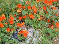 flores : creo que eran de una enredadera que estaba en la casa que da al fondo de la mia, se ve que la sacaron y la tiraron ahí, arriba de los escombros e igual crecio | ahorayya2