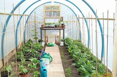 diy poly tunnel