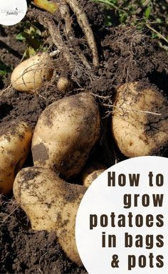 Grow your own potatoes in bags or pots with this comprehensive guide. Includes step-by-step planting instructions, plus advice on potato varieties and harvesting. #growyourown #gardeningtips #growingfamily Garden Seeds, Planting Seeds, Planting Seed Potatoes, Potato Varieties, Types Of Potatoes, Potato Bag, Compost Bags, Buy Seeds, Replant