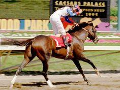 Champion horse Cigar dead at 24