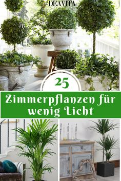 Die wunderbare Atmosphäre, die die Zimmerpflanzen schaffen, möchten man am lie… The wonderful atmosphere that houseplants create is best enjoyed in every room. Only rarely is every room flooded with light, which limits the selection of suitable plants. Potted Plants Patio, House Plants Decor, Garden Planters, Indoor Plants, Garden Care, Decoration Plante, Office Plants, Houseplants, Garden Landscaping