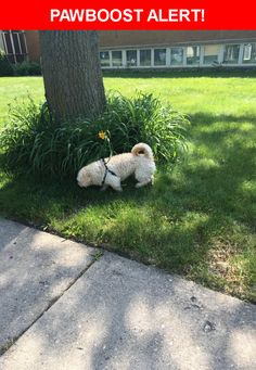 Is this your lost pet? Found in Chicago, IL 60707. Please spread the word so we can find the owner!    Near Wrightwood and New England Ave