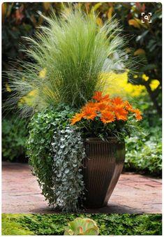 Mexican Feather grass, Orange Gazania,  Dichondra repens, Dichondra 'Silver Falls'