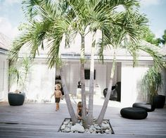 Palm growing through weathered timber decking and plantation shutters xx