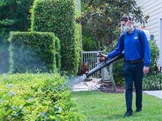 Importance of Mosquito Control  Mosquito Control is important to the community because of the vector potential that exists from mosquitoes in transmitting diseases and the annoyance factor in disrupting outdoor activities.