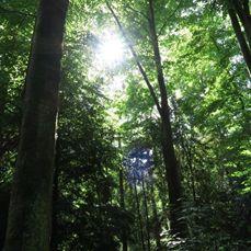 A beam of hope through the trees-Marianne Baan-2015