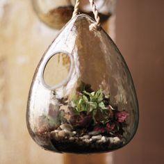 Dew Drop Hanging Glass Terrarium | dotandbo.com