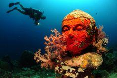 Underwater garden Pemuteran Bali