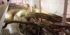 Labirinto de madeira no Museu de Arte Contemporânea da USP
